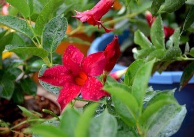 floracom plantes fleurs maraichers